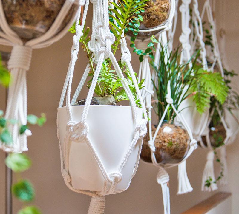 beautiful pilates studios melbourne pot plants